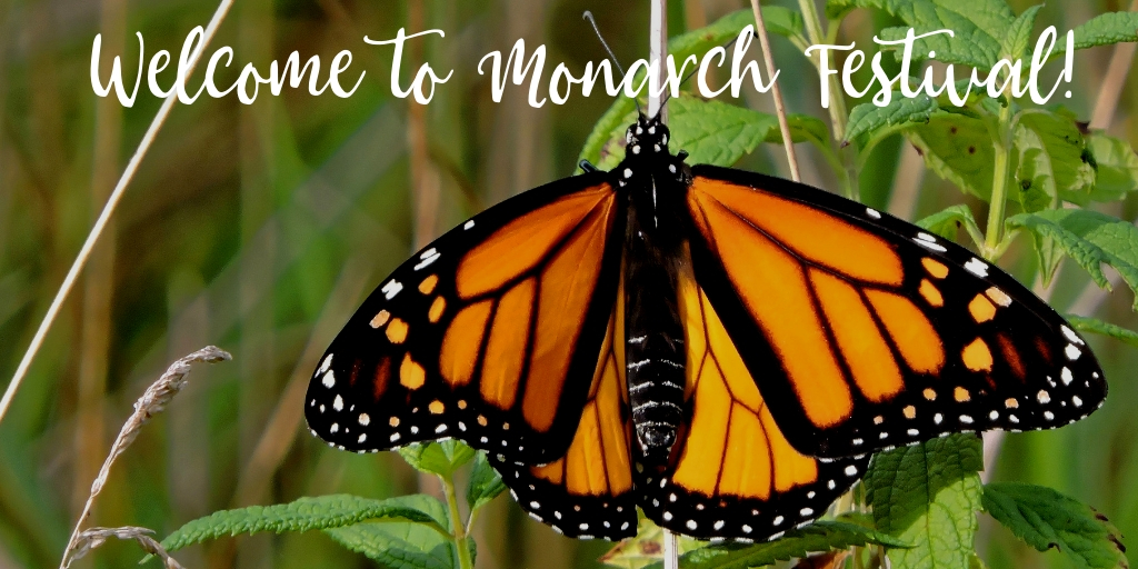 The San Antonio Zoo is hosting a 2-day Monarch Festival celebrating Monarch butterflies, their incredible migration, and everything about their species. Named the first Monarch Champion City by the National Wildlife Federation in 2017, San Antonio is a great supporter of these gorgeous creatures!